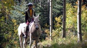 our-horse-ashram-1-insert