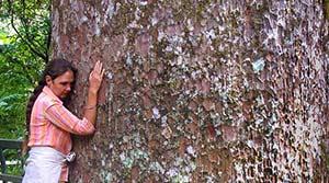 shantara-hugging-kauri-tree-list-300