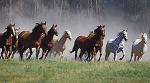 wild-horses-list-300